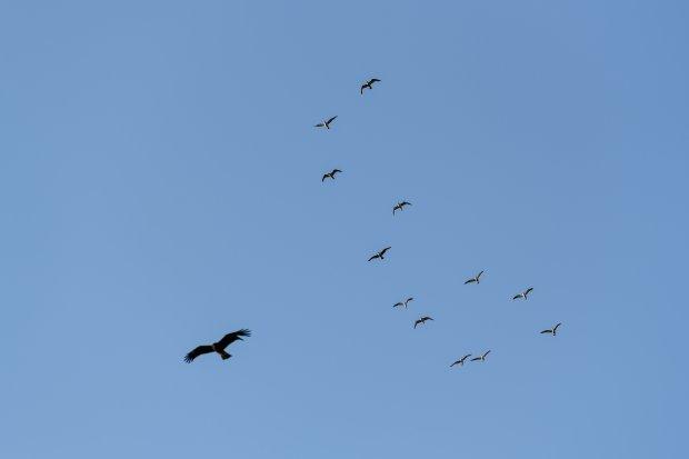 湘南の野鳥たち
