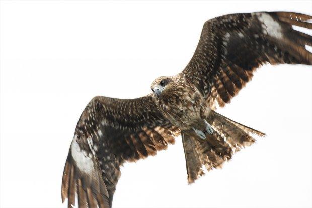 湘南の野鳥